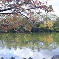 Photos: 池(1)