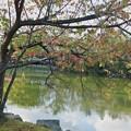 池の紅葉(2)