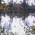 Photos: 池の紅葉(2)