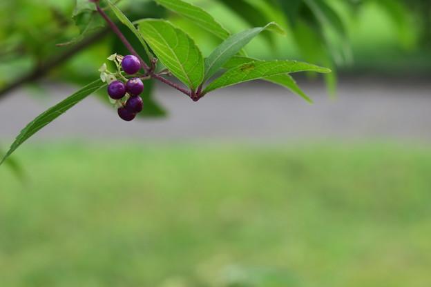 コムラサキ 紫の宝石☆彡