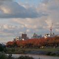 犀川の桜並木 紅葉