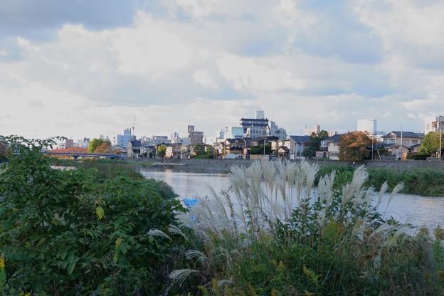 犀川 ススキ