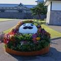 金沢城 ひゃくまんさんの花壇(寄せ植え)