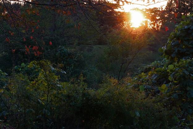 夕陽と紅葉