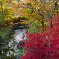 公園 の紅葉