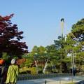 松の木の雪吊り(1)