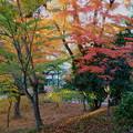 Photos: 兼六園 紅葉 山崎山(1)