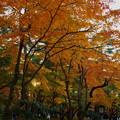Photos: 兼六園 山崎山から