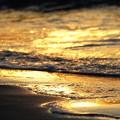 Photos: 千里浜 黄金の浜辺