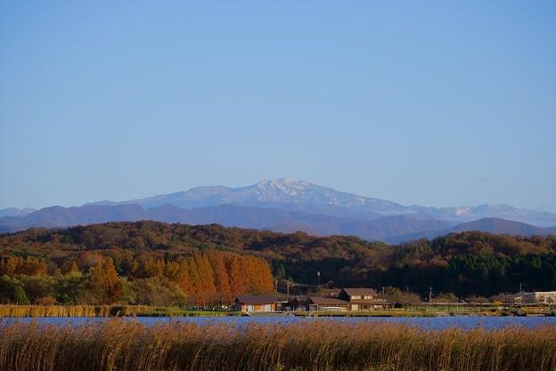 晩秋の木場潟から 冠雪の白山と紅葉