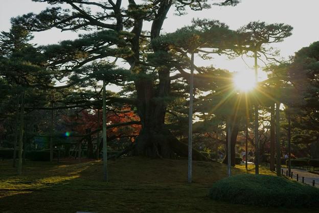 Photos: 根上松