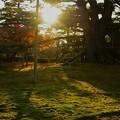Photos: 根上松と紅葉