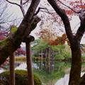 Photos: 紅葉のフレームから 唐崎松
