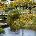 旭桜の黄葉