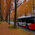 Photos: メタセコイアの並木道 バス
