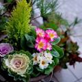 Photos: 寄せ植えを作りました
