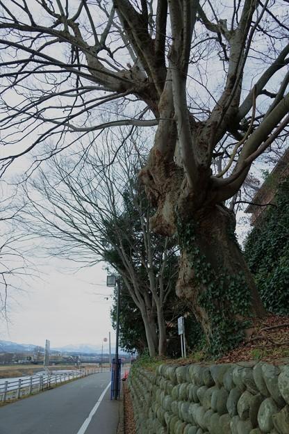 何の木かな?