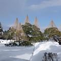 雪の兼六園 唐崎松