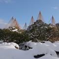 Photos: 青空と唐崎松