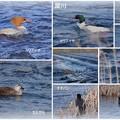 Photos: 犀川