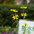 Photos: 散水栓