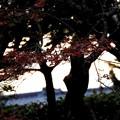 Photos: 夕闇迫る