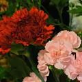 Photos: 好きな花