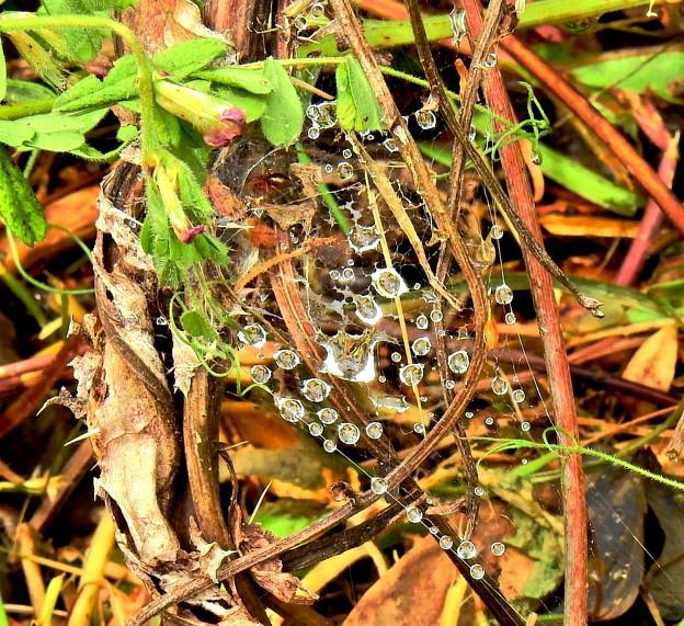 蜘蛛の巣雨滴
