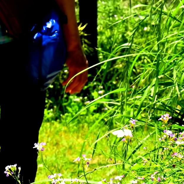 通行人と蝶