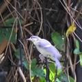 幸福の白い鳥