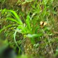 Photos: 白っぽく翔んでいたキアゲハかな