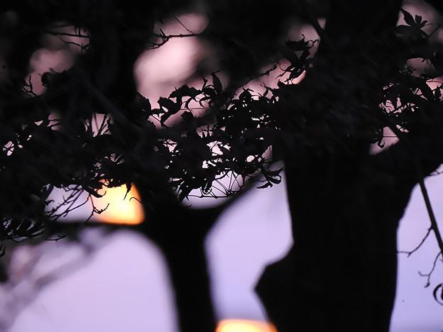 秋の夕べ灯が点る頃
