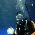 写真: 水槽の中のダイバー