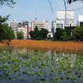 Photos: 上野不忍池 20190512