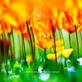 Flower's Dream. PART2