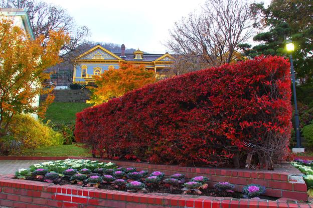 【秋を感じさせる綺麗な色に染まった元町公園】