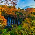 写真: 白糸の滝-2-