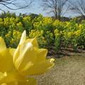 黄色と黄色
