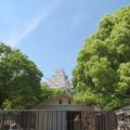 写真: 動物園からお城