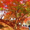 Photos: 紅葉のトンネル