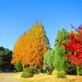 Photos: 赤、黄、緑、青