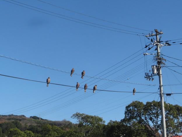 Photos: 電線に止まるのは・・・