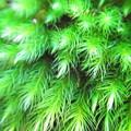 百済寺の苔