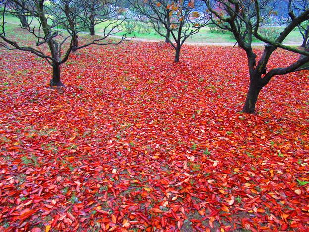 赤いじゅうたん