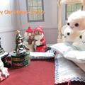 Photos: クリスマス2020