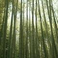 Photos: 竹やぶ