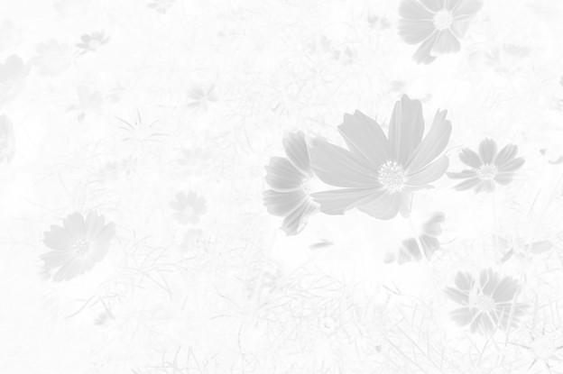 Photos: 再掲:霜月の幻想
