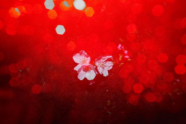 赤い花咲いた