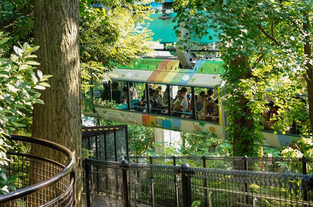 上野動物園_296