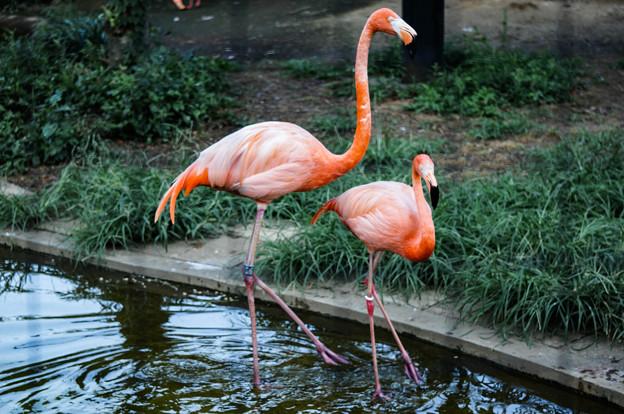 上野動物園_380
